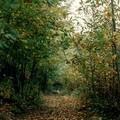 Il bosco, luogo di apprendimento