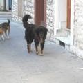 A scuola per vincere la paura dei cani