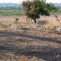 Bruciatura stoppie: al via tradizionale pratica a 0 rischio incendi