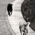 Parco per cani in via Cassano, tutto da rifare