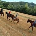 Una Murgia da percorrere a cavallo