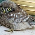 Sabato al Pulo di Altamura torneranno a volare i rapaci recuperati nei mesi estivi