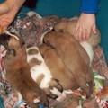 Una casa per sette cuccioli
