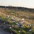 Igiene urbana, c'è l'obbligo per i proprietari di pulire le aree incolte