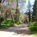 Il Comune adotta il Piano di gestione delle aree forestali