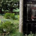 """Appuntamento in giardino: visite guidate alla  """"Moscatella """" (5-6 giugno)"""