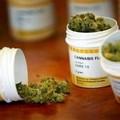 Cannabis terapeutica, in Puglia famiglie dei malati costrette a rivolgersi al mercato nero.