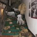 Inaugurato il Museo Etnografico dell'Alta Murgia