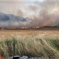 Alta Murgia, un'intera giornata di incendi