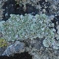 I licheni, esseri viventi millenari sulle rocce murgiane