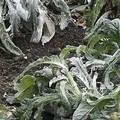 Burian 2 mette definitivamente in ginocchio l'agricoltura