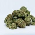 Cannabis terapeutica: Conca (M5S) scrive a Emiliano