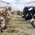Finanziamenti agli allevatori per lo smaltimento delle carcasse