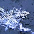Torna a nevicare sull'Alta Murgia