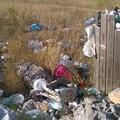Dolina Day, una domenica ecologica e di volontariato per la pulizia al Pulo
