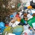Domenica ecologica Plastic free, i volontari in azione per la difesa dell'ambiente