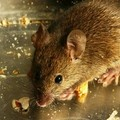 Un topo negli uffici comunali