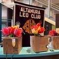 Tulipani donati all'ospedale