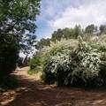Una passeggiata rigenerante nell'oasi verde di Murgia Sgolgore