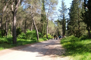 Foresta Mercadante