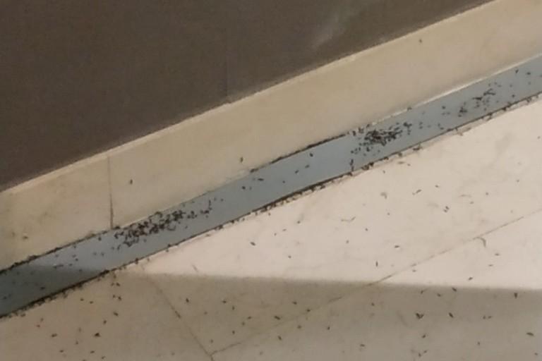 insetti al perinei