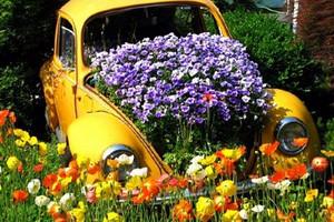 automobile giornata ecologica