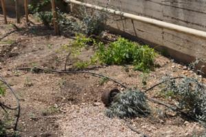 Giardino Padre Pio