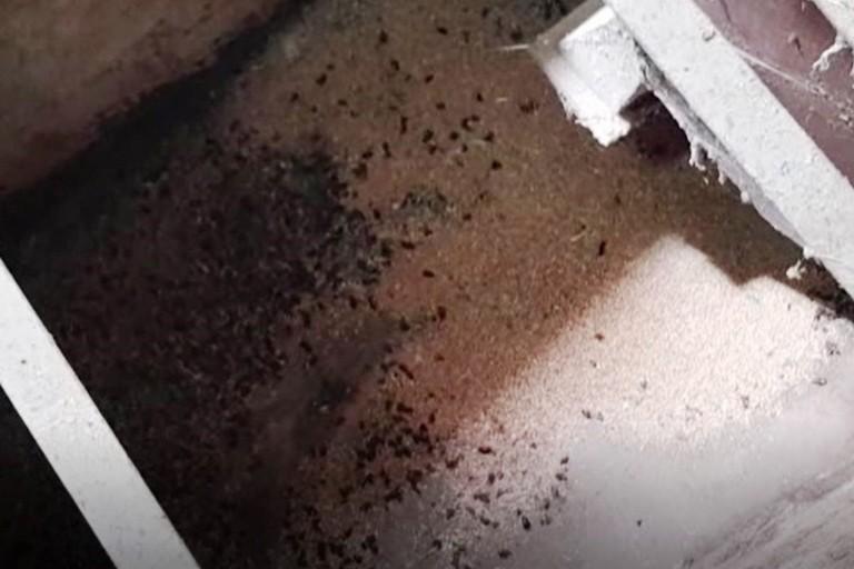 Parassiti in un mulino